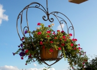 More than 80% of us have a hanging basket habit