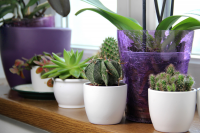Move houseplants outdoors
