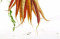 Thin carrots you sowed earlier this spring