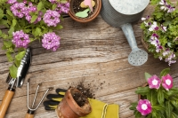 What to do in the garden in July